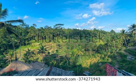 Landscape of rice terraces near Ubud in Bali, Indonesia - stock photo