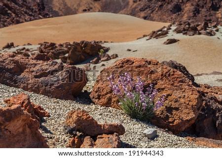 Landscape of Tenerife, Canary Islands, Spain. - stock photo