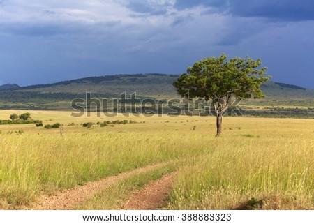 landscape of the masai mara national park kenya - stock photo