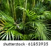Landscape of tropical bamboo plant in garden - stock photo