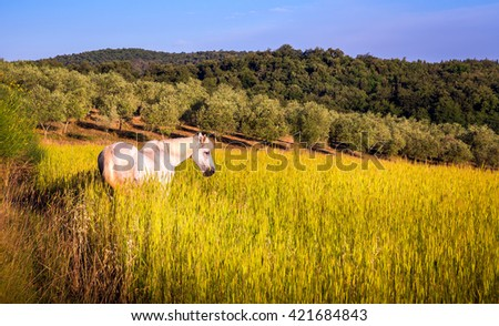Landscape of tuscan farmland with white horse in the middle - stock photo