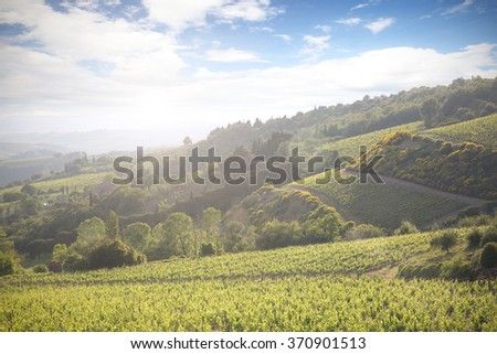 landscape of vineyard and toscana  - stock photo