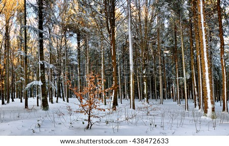 landscape of wood with snow in winter - stock photo