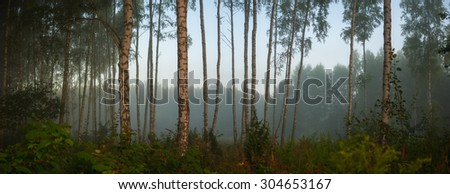 landscape of young grey forest with green trees, nature series - stock photo