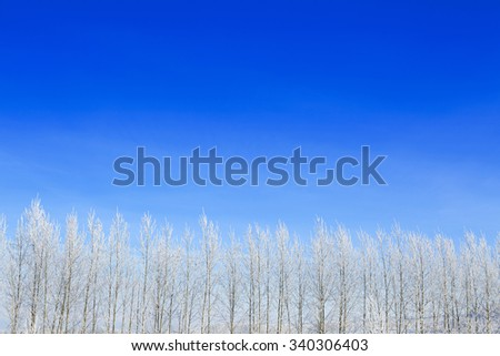 Landscape photo of a field and trees covered in fresh snow  with a clear blue sky. - stock photo