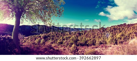Landscape pine tree and sunset panorama - stock photo