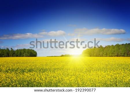 Landscape, rape field and sky. - stock photo