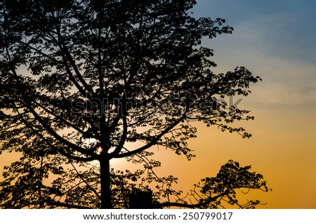 Landscape Scene of an Oak Tree Silhouetted against a Beautiful Cloudy Sky at Sunset - stock photo