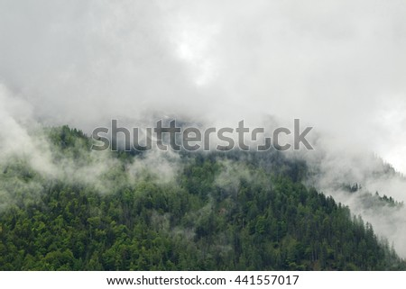 Landscape scenic view of green pine forest high mountain in low clouds during summer in Europe - stock photo