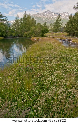 Landscape shot of small white flowers in foreground with majestic snowy mountains in background. - stock photo