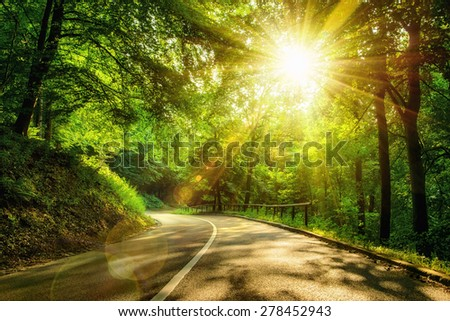 Landscape shot with the gold sun rays illumining a scenic road in a beautiful green forest, with light effects and shadows - stock photo
