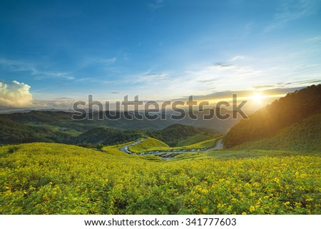 Landscape sunset nature flower tung bua tong mexican sunflower field in mae hong son thailand - stock photo