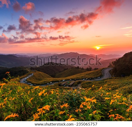 Landscape sunset nature flower Tung Bua Tong Mexican sunflower  in Maehongson Province, Thailand.  - stock photo