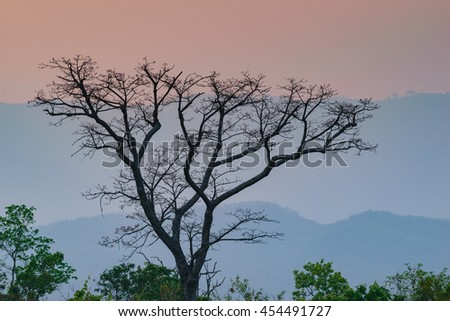 Landscape  Sunset-Sunrise tree with an african tree at sunset, Zambia, Africa   - stock photo