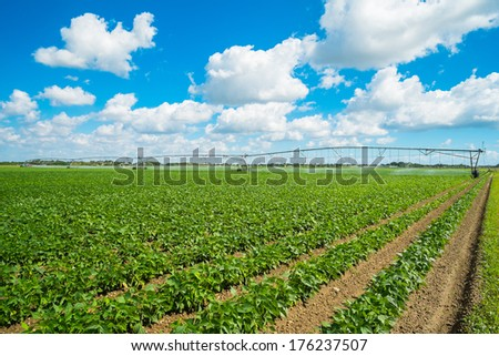 Landscape view of a freshly growing agriculture field. - stock photo