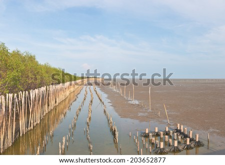Landscape view of coastal mangrove forest conservation site - stock photo