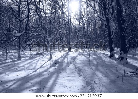 landscape winter snow forest - stock photo