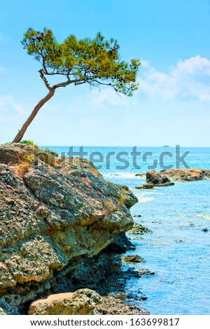 landscape with a lonely pine tree on the background of the sea - stock photo