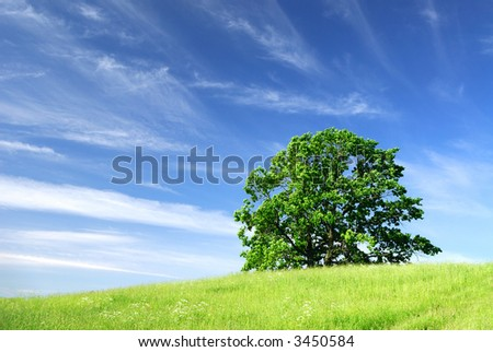 Landscape with a tree and clouds - stock photo