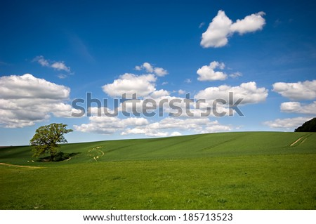 Landscape with a tree on a hill. The sky is blue with white clouds. - stock photo