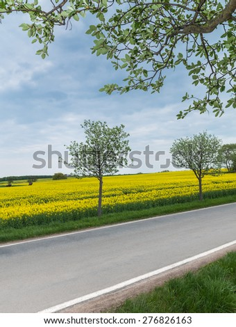 Landscape with blooming rape field and trees along country road under cloudy sky in April - stock photo