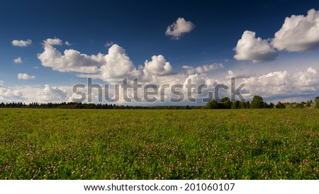 Landscape with clover field and blue sky - stock photo