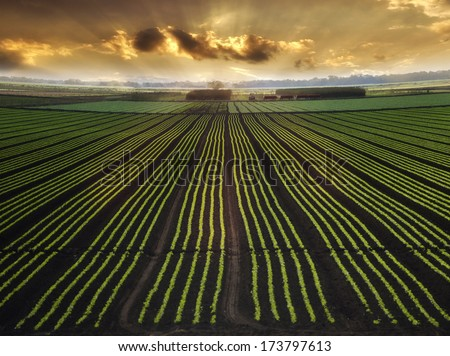 Landscape with Field And Beautiful Sky At Sunrise - stock photo