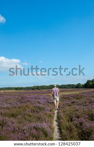 Landscape with flowering heather plants and single path with man - stock photo