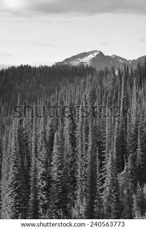 Landscape with forest in British Columbia. Mount Revelstoke. Canada. Vertical - stock photo