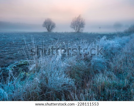 landscape with frosty plants on field - stock photo
