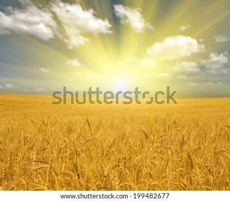 landscape with golden wheat field under blue sky and clouds - stock photo