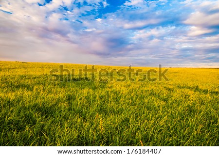landscape with grass field and dramatic sky at sunset - stock photo