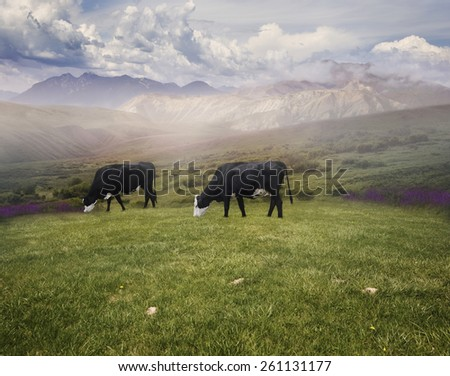 Landscape With Grazing Cows In The Early Morning - stock photo