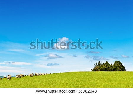Landscape with green field and grazing sheep - stock photo