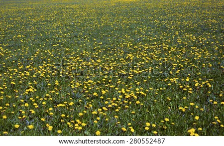 Landscape with green meadow with many yellow dandelions - stock photo