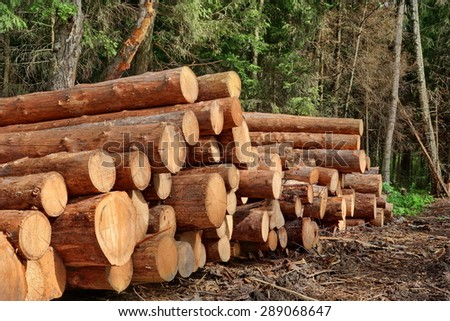 Landscape With Large Woodpile In The Summer Forest From Sawn Old Big Pine And  Spruce Hewn Logs For Forestry Industry - stock photo