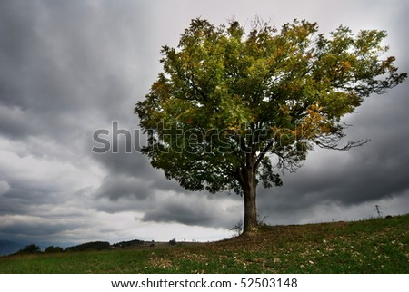 Landscape with lonely tree and dark stormy sky - stock photo