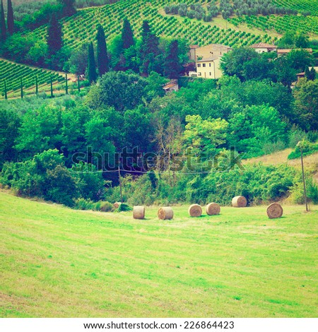 Landscape with Many Hay Bales and Vineyard, Instagram Effect - stock photo