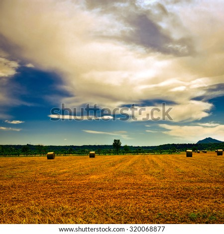 Landscape with Many Hay Bales and Vineyard, Vintage Style Toned Picture - stock photo