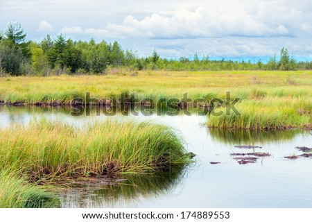 Landscape with marsh overgrown sedge, Russia - stock photo