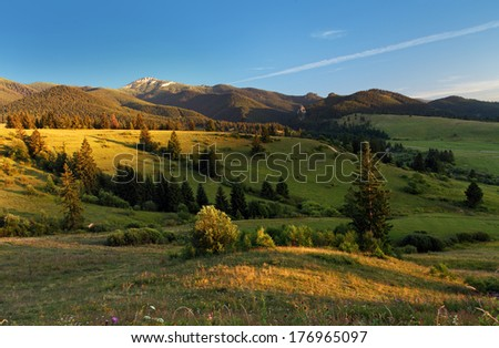 Landscape with meadow and forest - stock photo