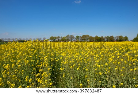 Landscape with rape seed and farm houses - stock photo
