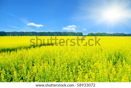 Landscape with rapeseed flowers and sun shining - stock photo