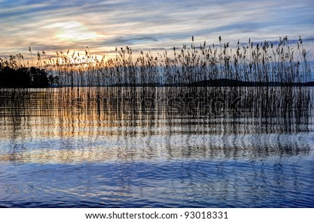 Landscape with reed at sunset - stock photo