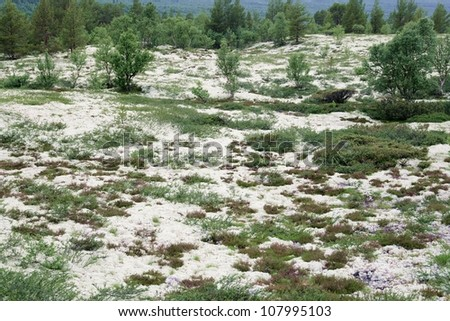 Landscape with reindeer moss - stock photo