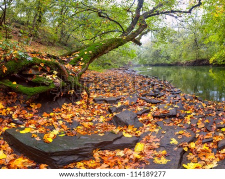 Landscape with river and big tree on the coast covered with yellow foliage, around autumn forest, outdoors - stock photo
