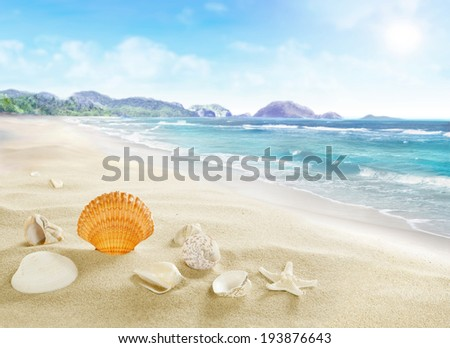 Landscape with shells on sandy beach. - stock photo