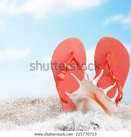 Landscape with shells on tropical beach - stock photo