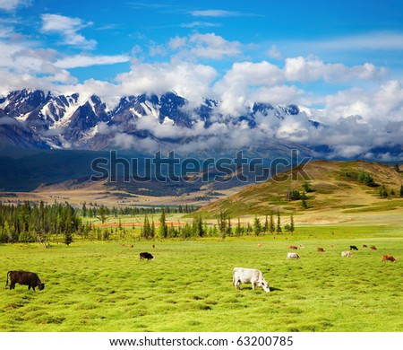 Landscape with snowy mountains and grazing cows - stock photo