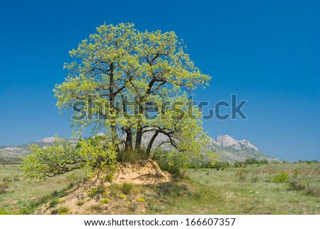 Landscape with splendid lonely oak on a hill against Eastern Crimean mountains at spring season. - stock photo